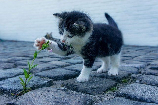 cat plant new hobbies
